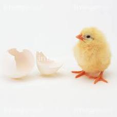 名無しの鶏肉's user icon