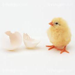 名無しの鶏肉@低浮上のユーザーアイコン