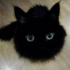 毛玉 黒猫のユーザーアイコン