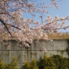 桜歌のユーザーアイコン