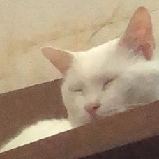 White catのユーザーアイコン