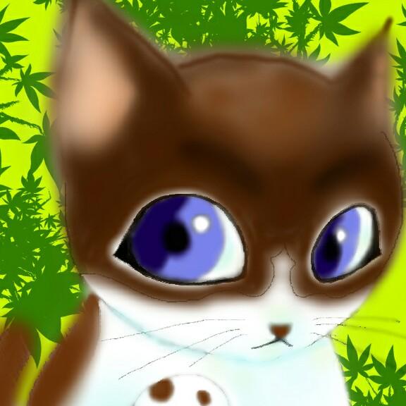大福 -だいふく-年中風邪引き猫のユーザーアイコン
