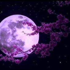 月櫻のユーザーアイコン
