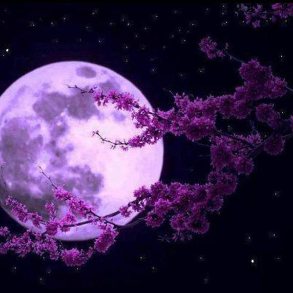 月櫻♡のユーザーアイコン