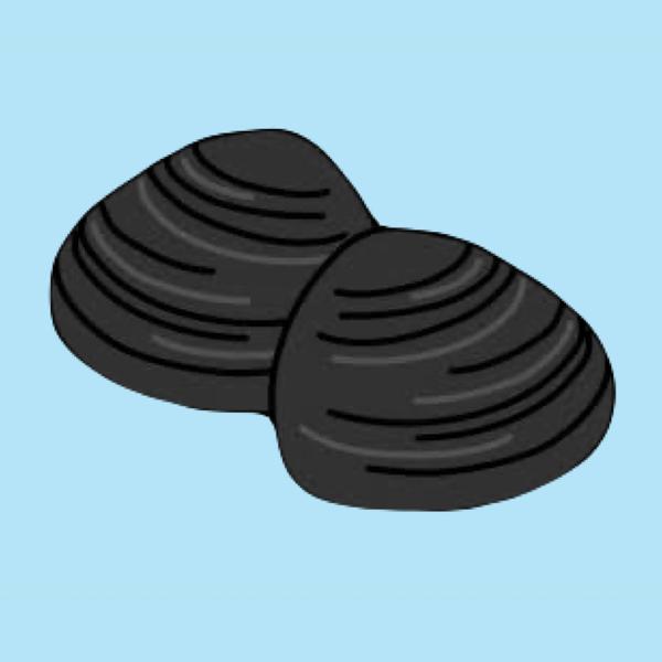 しじみ。's user icon