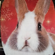 B.C.Rabbitsのユーザーアイコン