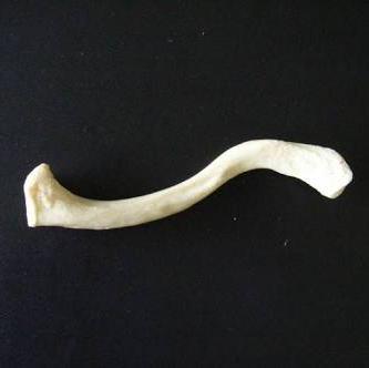 鎖骨ちゃんのユーザーアイコン