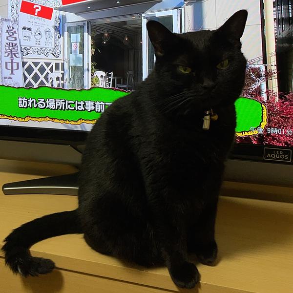 kouhei@blackcat96のユーザーアイコン