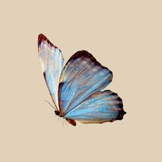 kavya... ༶•┈┈⛧┈♛'s user icon