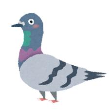 Pigeonのユーザーアイコン