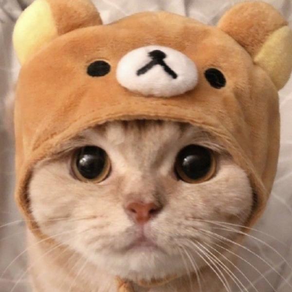 ちゃんいむ's user icon