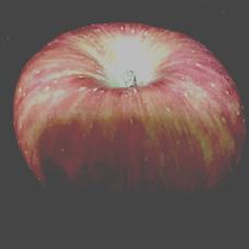 サラマンダー's user icon