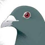 5000兆円欲しい綾鷹のユーザーアイコン