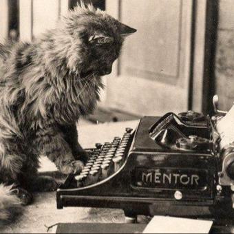 catのユーザーアイコン