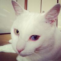 ひーちゃん/h111chanのユーザーアイコン