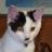chika5153のユーザーアイコン