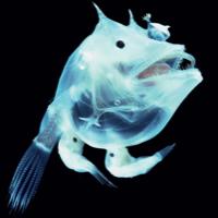 深海魚のユーザーアイコン