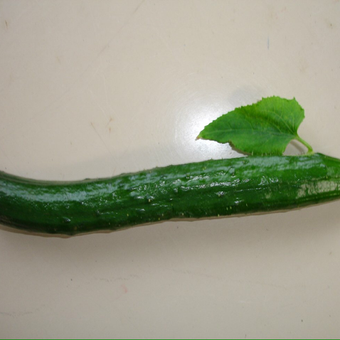 Cucumberのユーザーアイコン