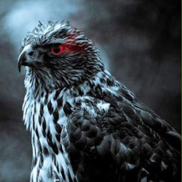 黒鷹/nana引退します。のユーザーアイコン