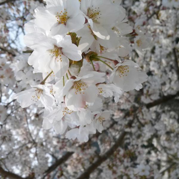 咲夢のユーザーアイコン